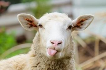 طلا و سکه ارزان می شود؟