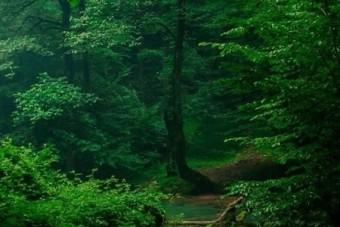 چای سبز راحل خواب راحت